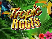 Tropic Reels в игровом клубе Вулкан